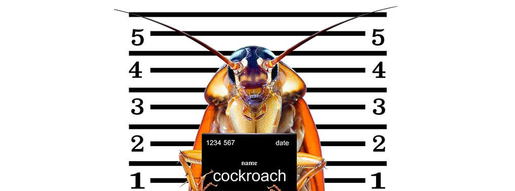 7 Things you MUST Know About Cockroaches