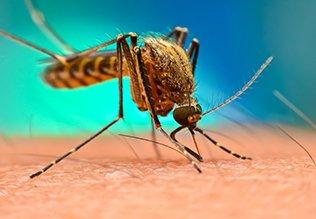 मलेरिया और डेंगी के बीच समानताएं