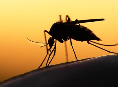 What Keeps Mosquitoes Away? Best Mosquito Killer For Home
