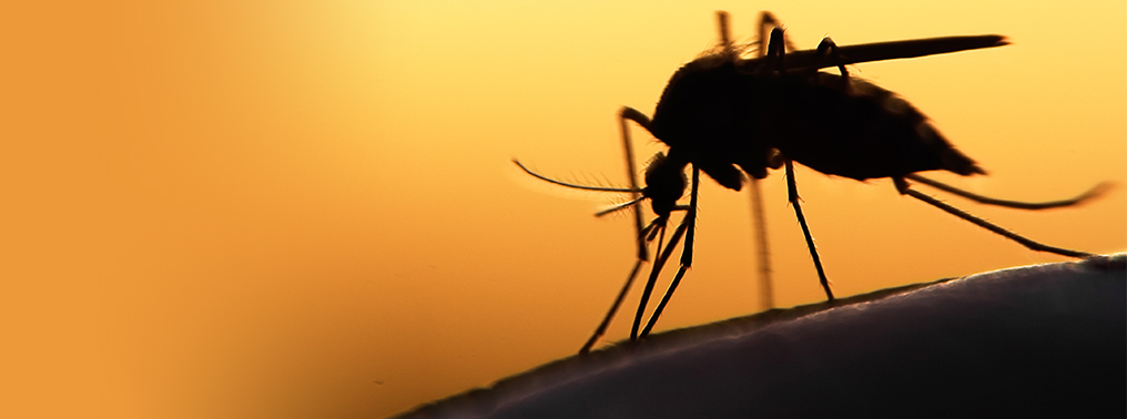 Debunking Common Myths about Mosquito Repellents