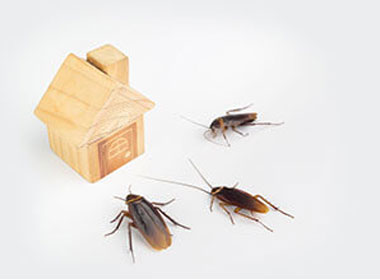 Insect Proofing Your House During Lockdown