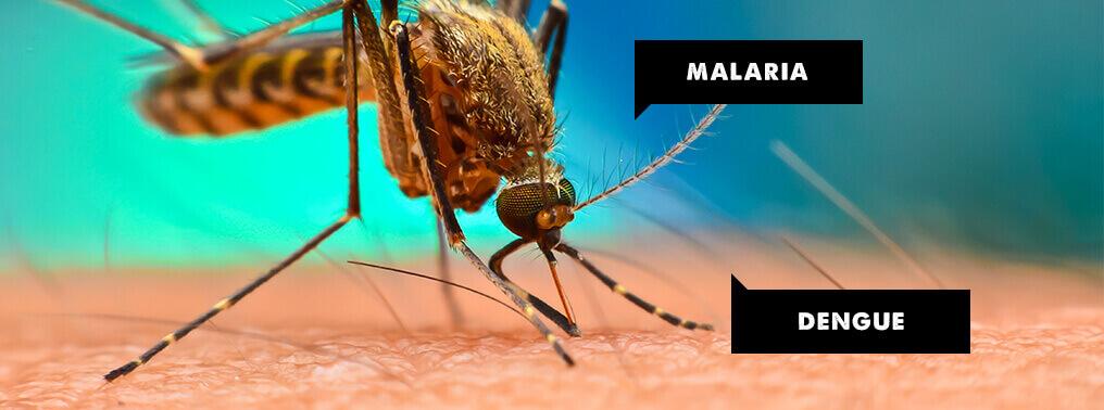 COMMON SYMPTOMS BETWEEN MALARIA AND DENGUE