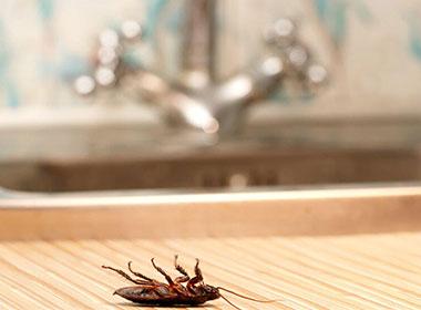 The Hidden Spots of Cockroaches