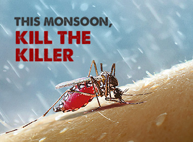 The many types of mosquitoes and why they are all dangerous