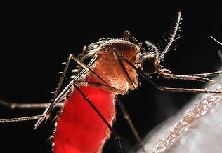 Mosquitoes In India: How Mosquito Killer Spray Helps