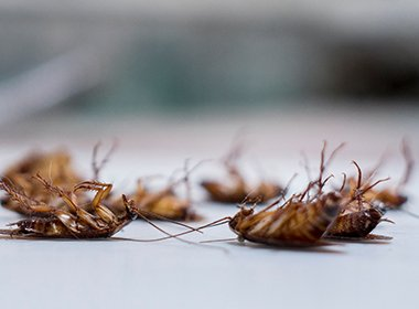 WHY KILL THE COCKROACH WHEN YOU CAN KILL THE NEST