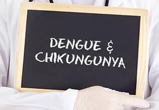 डेंगी और चिकनगुनिया के बीच अंतर